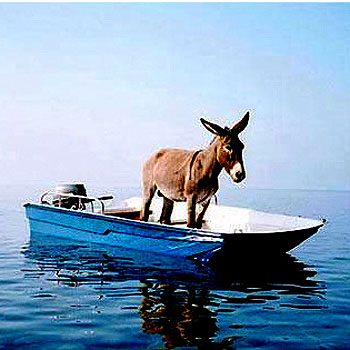 Donkey-on-slow-boat