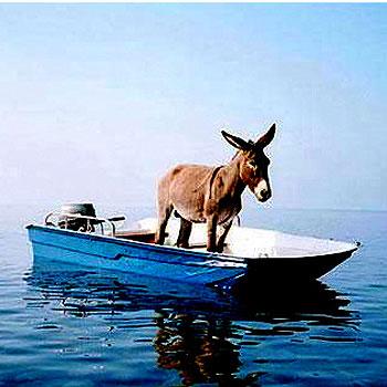 Donkey-on-slow-boat